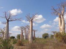 Madagascar 2018